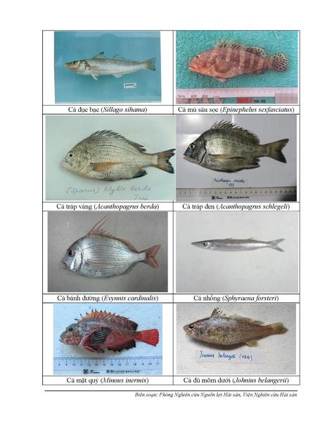 154 loại hải sản miền Trung khuyến cáo chưa được ăn-P4 - ảnh 2