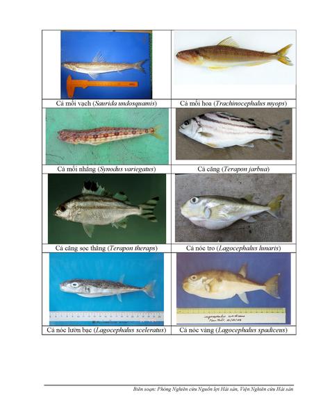 154 loại hải sản miền Trung khuyến cáo chưa được ăn-P6 - ảnh 2