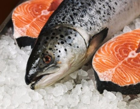 cá hồi giàu vitamin E
