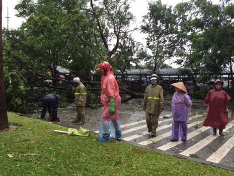 Bão số 1 tràn về Hà Nội: Cây đổ tan hoang - ảnh 9
