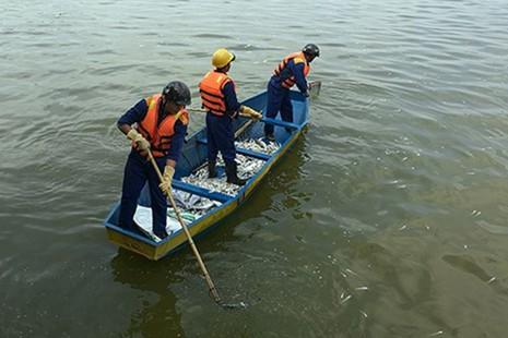 Hà Nội: Cá chết trắng xóa Hồ Tây, vì sao? - ảnh 3