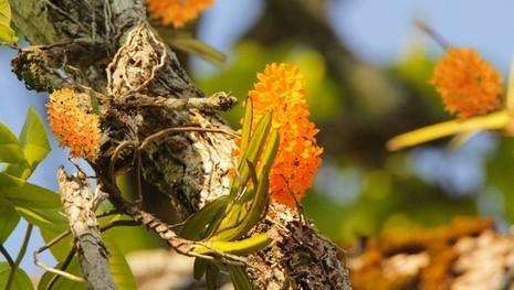 Vườn Quốc gia Yok Don mùa này có gì đẹp? - ảnh 7