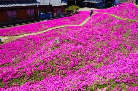 Cụ già trồng một đồi hoa để tặng người vợ mù - ảnh 10