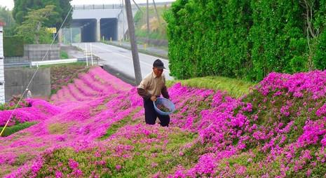 Cụ già trồng một đồi hoa để tặng người vợ mù - ảnh 3