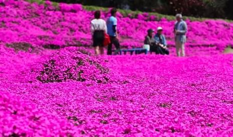 Cụ già trồng một đồi hoa để tặng người vợ mù - ảnh 9