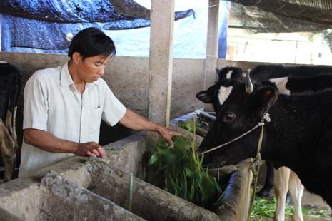 Nông dân Củ Chi bị buộc góp vốn xây nhà máy sữa - ảnh 1
