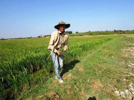 Hạn hán ở Ninh Thuận: Làm rẫy dưới lòng hồ vẫn thiếu nước - ảnh 2