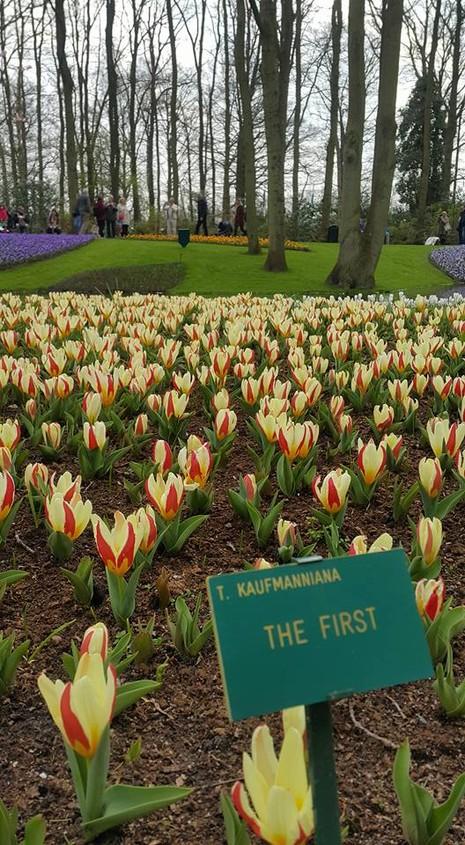 Keukenhof: Vườn hoa xuân đẹp nhất thế giới - ảnh 17