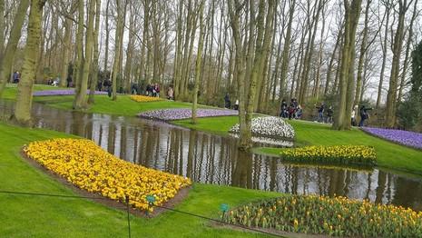 Keukenhof: Vườn hoa xuân đẹp nhất thế giới - ảnh 10