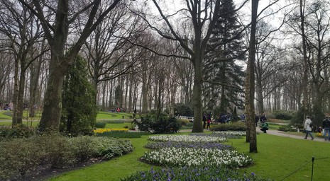 Keukenhof: Vườn hoa xuân đẹp nhất thế giới - ảnh 8