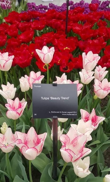 Keukenhof: Vườn hoa xuân đẹp nhất thế giới - ảnh 14