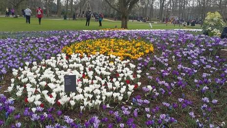 Keukenhof: Vườn hoa xuân đẹp nhất thế giới - ảnh 7