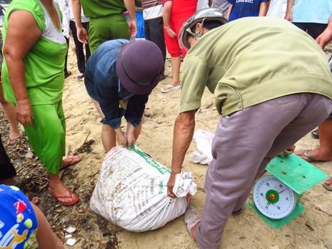 Cá nuôi lồng ở Huế tiếp tục chết hàng loạt - ảnh 8