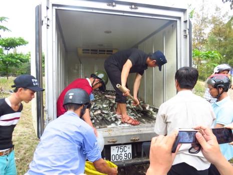 Cá nuôi lồng ở Huế tiếp tục chết hàng loạt - ảnh 2