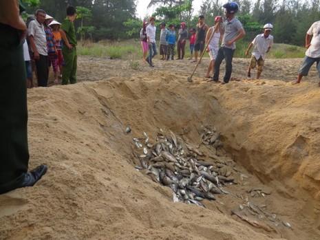 Cá nuôi lồng ở Huế tiếp tục chết hàng loạt - ảnh 3