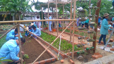 Sinh viên dựng 'vườn rau liệu pháp' tặng bệnh viện - ảnh 3