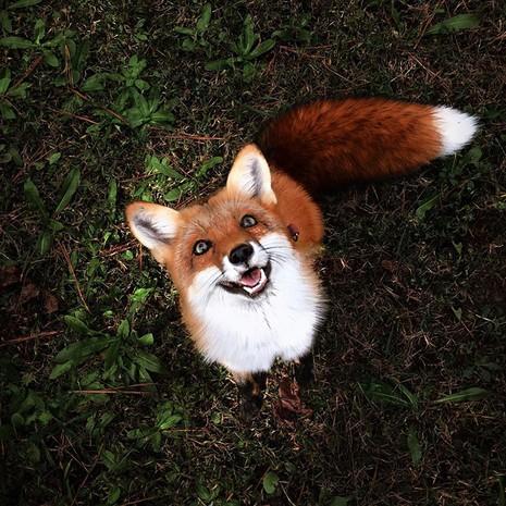 Tình yêu kỳ lạ của cáo và chó - ảnh 9