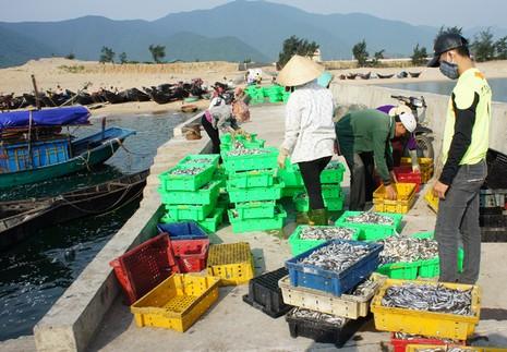 Chấn chỉnh việc cấp gạo hỗ trợ ngư dân tại Hà Tĩnh - ảnh 2