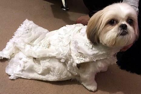 Cô dâu với chiếc váy cưới đáng yêu