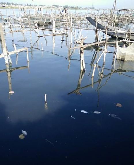 Ước tính ban đầu có khoảng 37 hộ nuôi cá lồng có hiện tượng cá chết
