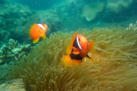 Biển Cù Lao Chàm tuyệt đẹp dưới ống kính du khách - ảnh 1