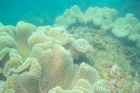 Biển Cù Lao Chàm tuyệt đẹp dưới ống kính du khách - ảnh 2