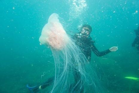 Biển Cù Lao Chàm tuyệt đẹp dưới ống kính du khách - ảnh 6