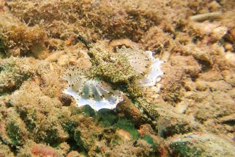 Biển Cù Lao Chàm tuyệt đẹp dưới ống kính du khách - ảnh 9