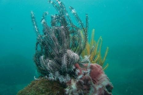 Biển Cù Lao Chàm tuyệt đẹp dưới ống kính du khách - ảnh 10