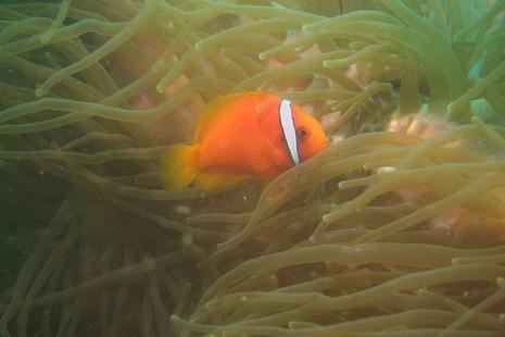 Biển Cù Lao Chàm tuyệt đẹp dưới ống kính du khách - ảnh 11