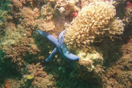 Biển Cù Lao Chàm tuyệt đẹp dưới ống kính du khách - ảnh 13