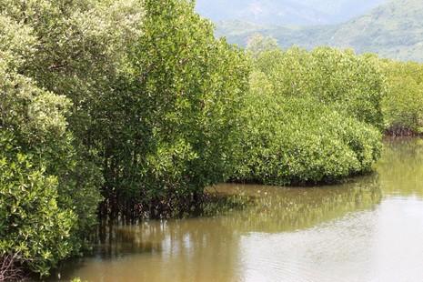 Ngắm rừng đước xanh mướt dọc làng chài vừa được hồi sinh  - ảnh 4