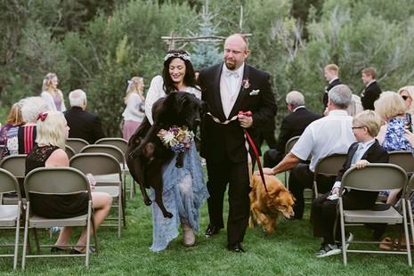 Chú chó gắng gượng dự đám cưới chủ trước khi qua đời - ảnh 3
