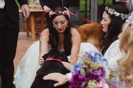 Chú chó gắng gượng dự đám cưới chủ trước khi qua đời - ảnh 7