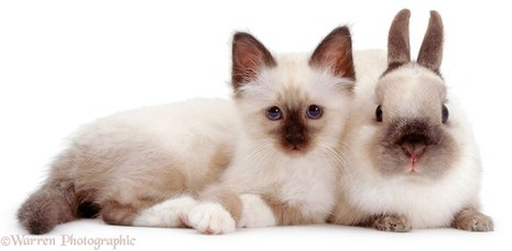 Những cặp 'song sinh' khác giống cực đáng yêu - ảnh 10