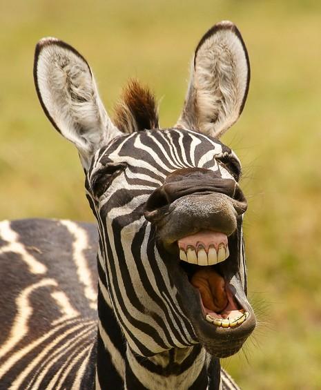 Chùm ảnh hài hước về động vật - ảnh 1