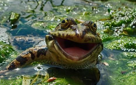 Chùm ảnh hài hước về động vật - ảnh 3