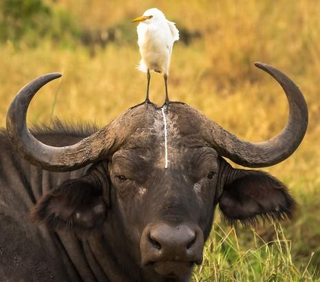 Chùm ảnh hài hước về động vật - ảnh 4