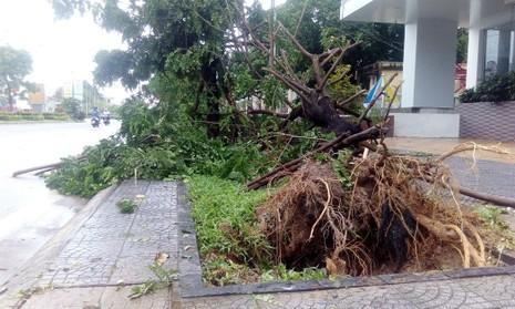 Hàng loạt cây xanh ở Huế bị quật gãy trong đêm - ảnh 2