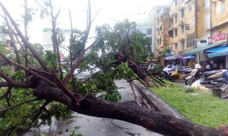 Hàng loạt cây xanh ở Huế bị quật gãy trong đêm - ảnh 1