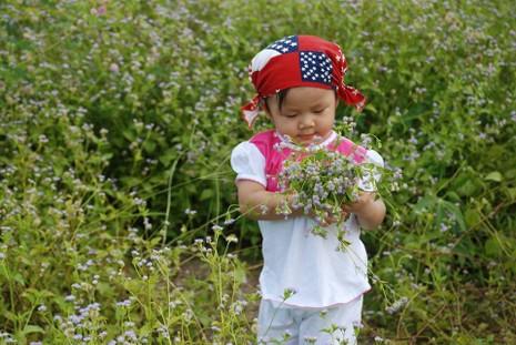 Bất ngờ với đồng hoa dại giữa lòng TP Tây Ninh - ảnh 6