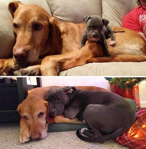 Thích thú với những cặp đôi thú cưng lớn lên cùng nhau - ảnh 4