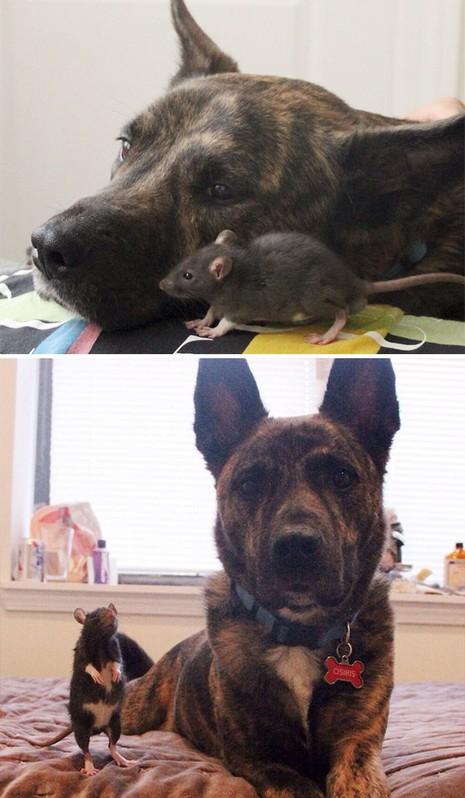 Thích thú với những cặp đôi thú cưng lớn lên cùng nhau - ảnh 6