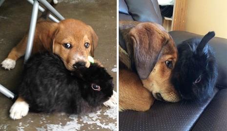 Thích thú với những cặp đôi thú cưng lớn lên cùng nhau - ảnh 7