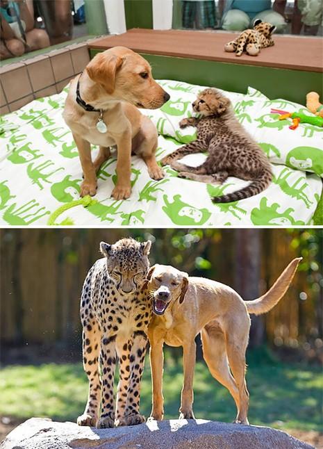 Thích thú với những cặp đôi thú cưng lớn lên cùng nhau - ảnh 13
