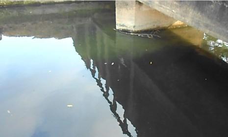 Rau xanh trồng bằng nước đen ngòm, bốc mùi hôi thối - ảnh 5