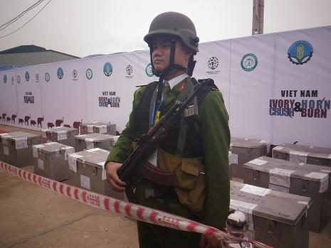 Lần đầu tiên Việt Nam tiêu hủy hơn 2.000 kg ngà voi - ảnh 1