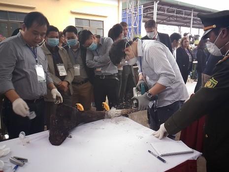 Lần đầu tiên Việt Nam tiêu hủy hơn 2.000 kg ngà voi - ảnh 4