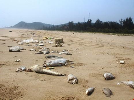 Cá chết hàng loạt tại các tỉnh miền Trung do hậu quả từ việc xả chất thải của KCN Formosa. Ảnh: Đ.LAM