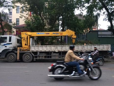 Cây cổ thụ bật gốc, đè bẹp ô tô tại Hà Nội - ảnh 5